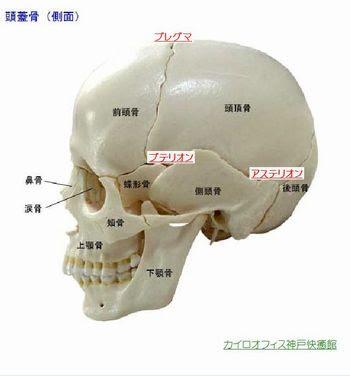 頭蓋骨矯正