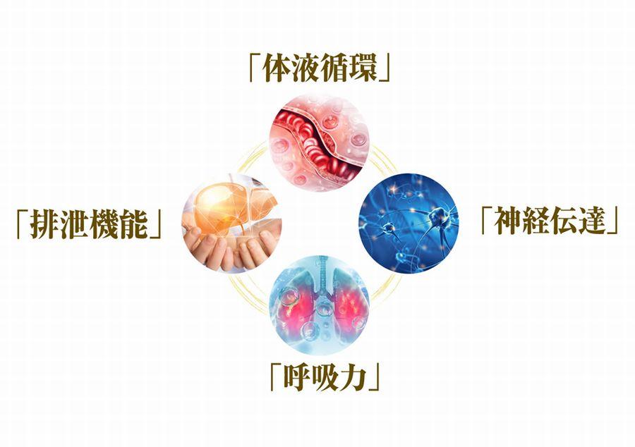 4つの身体のサイクル
