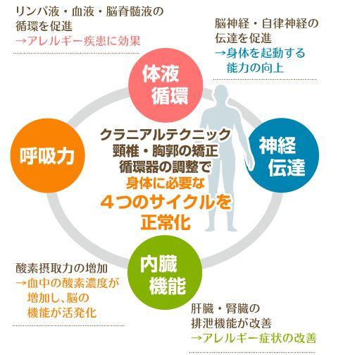 身体に必要な4つのサイクル